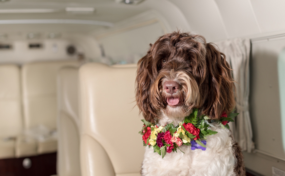 Pet Friendly Flights in Royal Pacific Air Charter, Honolulu